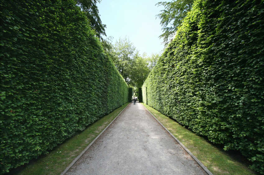 beautiful trimmed hedges
